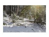 Название: IMG_4361 Фотоальбом: Зимний лес Категория: Природа Фотограф: Region_65  Время съемки/редактирования: 2012:12:01 17:14:04 Фотокамера: Canon - Canon EOS 50D Диафрагма: f/8.0 Выдержка: 1/160 Фокусное расстояние: 47/1    Просмотров: 1085 Комментариев: 0
