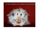 Название: Мышь Фотоальбом: Разное Категория: Разное  Просмотров: 602 Комментариев: 0