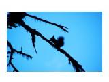 DSC01325_resize Фотограф: В.Дейкин  Просмотров: 2606 Комментариев: 0