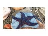 Звезда.. синяя..  Фотограф: vikirin  Просмотров: 1539 Комментариев: 0
