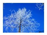 Деревья Фотограф: alexei1903  Просмотров: 1160 Комментариев: 0