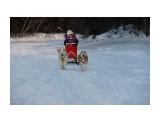 Название: IMG_7073 Фотоальбом: Мои собаки!!! Категория: Животные  Просмотров: 1813 Комментариев: 4