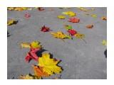 Название: На асфальте Фотоальбом: 2008 10 17 Осень в Южном Категория: Природа Фотограф: vikirin  Время съемки/редактирования: 2008:10:17 12:08:22 Фотокамера: Canon - Canon PowerShot SX100 IS Диафрагма: f/4.5 Выдержка: 1/1600 Фокусное расстояние: 6000/1000 Светочуствительность: 200   Просмотров: 4839 Комментариев: 1
