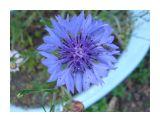 Название: Фото 3 Фотоальбом: Сахалинские цветы Категория: Цветы  Время съемки/редактирования: 2009:08:09 17:02:02 Фотокамера: SONY - DSC-T70 Диафрагма: f/3.5 Выдержка: 10/1250 Фокусное расстояние: 688/100 Светочуствительность: 100   Просмотров: 618 Комментариев: 0