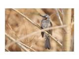 Название: _DSC4434 Фотоальбом: Птички Категория: Животные Фотограф: VictorV  Время съемки/редактирования: 2020:04:02 21:25:58 Фотокамера: SONY - DSLR-A900 Диафрагма: f/6.3 Выдержка: 1/800 Фокусное расстояние: 6000/10    Просмотров: 10 Комментариев: 0