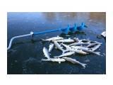 Название: первый улов Фотоальбом: по первому льду Категория: Рыбалка, охота  Просмотров: 2893 Комментариев: 0