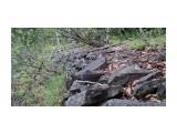 Камни, уложенные в основание бывшей железной дороги Район реки Пилевка  Просмотров: 1897 Комментариев: