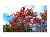 Краски сахалинской осени. Фотограф: 7388PetVladVik  Просмотров: 2689 Комментариев: 0