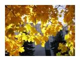 Название: Горит огнем Фотоальбом: 2008 10 17 Осень в Южном Категория: Природа Фотограф: vikirin  Время съемки/редактирования: 2008:10:17 12:13:38 Фотокамера: Canon - Canon PowerShot SX100 IS Диафрагма: f/4.5 Выдержка: 1/640 Фокусное расстояние: 6000/1000 Светочуствительность: 200   Просмотров: 4614 Комментариев: 0