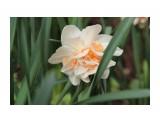 Название: IMG_9621 Фотоальбом: Разное Категория: Цветы  Время съемки/редактирования: 2015:04:05 11:05:28 Фотокамера: Canon - Canon EOS 600D Диафрагма: f/7.1 Выдержка: 1/125 Фокусное расстояние: 135/1    Просмотров: 75 Комментариев: 0