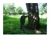 У большого дерева и стоять хорошо!