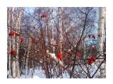 Красные капли шиповника Фотограф: vikirin  Просмотров: 3344 Комментариев: 0