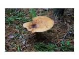 DSC04277 - копия Фотограф: vikirin  Просмотров: 518 Комментариев: 0
