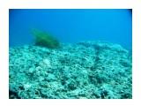 Название: Под водой Фотоальбом: Виды и добыча подводной охоты. Лето 2013г. Категория: Природа Фотограф: Тимофеев И.В.  Время съемки/редактирования: 2007:01:06 03:53:52 Фотокамера: Canon - Canon PowerShot A570 IS Диафрагма: f/2.6 Выдержка: 1/1000 Фокусное расстояние: 5800/1000    Просмотров: 491 Комментариев: 0