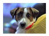 Картинки с выставки (собаки) ЮСХ 10-06-2018  8262   Просмотров: 167  Комментариев: 0