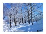 Деревья Фотограф: alexei1903  Просмотров: 1298 Комментариев: 0