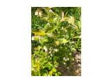 Название: Голубика цветет Фотоальбом: Природа 2021г Категория: Цветы  Просмотров: 203 Комментариев: 0