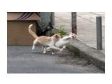 Название: кошки Фотоальбом: кошки Категория: Животные  Просмотров: 498 Комментариев: 5