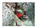 Название: Сифон Фотоальбом: Виды и добыча подводной охоты. Лето 2013г. Категория: Природа Фотограф: Тимофеев И.В.  Время съемки/редактирования: 2007:01:06 03:49:05 Фотокамера: Canon - Canon PowerShot A570 IS Диафрагма: f/2.6 Выдержка: 1/250 Фокусное расстояние: 5800/1000    Просмотров: 608 Комментариев: 0