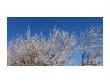Морозная яблоня у РИКа Фотограф: vikirin  Просмотров: 1223 Комментариев: 0