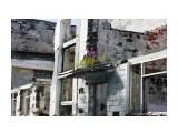 на развалинах Синегорска... Фотограф: vikirin  Просмотров: 1164 Комментариев: 0