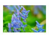 DSC07963_новый размер Фотограф: В.Дейкин  Просмотров: 684 Комментариев: 0