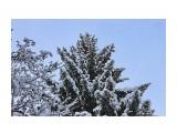 Зимняя сказка.. декабрь.. Фотограф: vikirin  Просмотров: 1667 Комментариев: 0