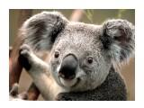 Koala  Просмотров: 8 Комментариев: