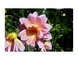 IMG_7707 Фотограф: vikirin  Просмотров: 465 Комментариев: 0