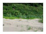Барханчики плотного песка ... Фотограф: vikirin  Просмотров: 3687 Комментариев: 0