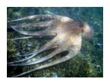 Underwater-portVendres21_135600335  Просмотров: 121 Комментариев: