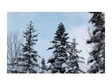 Елки на перевале.. к Новому году... Фотограф: vikirin  Просмотров: 1298 Комментариев: 0