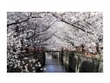 Название: берега реки Мегуро Фотоальбом: Японская дорожная инфраструктура... Категория: Туризм, путешествия Описание: урегулированные склоны реки  Просмотров: 183 Комментариев: 0