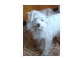 Мой пёс ЗВОНОК  Просмотров: 2770 Комментариев: