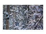 Зимний лес.. декабрь... Фотограф: vikirin  Просмотров: 1614 Комментариев: 0
