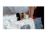 IMG_0461 Мишка (утилизирован), Найда (утилизирована), Белка (жива).  Просмотров: 107 Комментариев: 0