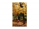 Осенние прогулки (1) Южно-Сахалинск  Просмотров: 1706 Комментариев: