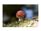 Название: _DSC0985 Фотоальбом: Цветочки-ягодки  разные... Категория: Природа Фотограф: VictorV  Время съемки/редактирования: 2021:09:20 20:40:57 Фотокамера: SONY - ILCA-77M2 Диафрагма: f/5.6 Выдержка: 1/200 Фокусное расстояние: 4000/10    Просмотров: 40 Комментариев: 0