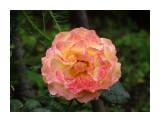 Название: DSC07407_н Фотоальбом: Розы в сквере музея Категория: Цветы  Время съемки/редактирования: 2016:07:29 14:03:58 Фотокамера: SONY - DSC-HX300 Диафрагма: f/5.6 Выдержка: 1/250 Фокусное расстояние: 11268/100    Просмотров: 40 Комментариев: 0