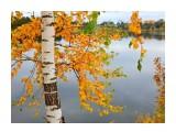 Название: И с каждой осенью я расцветаю вновь... А.С.Пушкин Фотоальбом: Природа-2 Категория: Природа  Просмотров: 32 Комментариев: 0