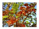 деревья Фотограф: alexei1903  Просмотров: 1347 Комментариев: 0