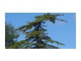 Название: Север. Фотоальбом: Разное Категория: Природа  Время съемки/редактирования: 2017:09:14 13:28:21 Фотокамера: Panasonic - DMC-LZ30 Диафрагма: f/10.6 Выдержка: 1/250 Фокусное расстояние: 3640/100    Просмотров: 400 Комментариев: 0
