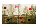 Мармеладный листопад (1) Южно-Сахалинск  Просмотров: 1552 Комментариев: