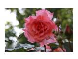 Название: IMG_3930 Фотоальбом: Цветы Категория: Цветы  Просмотров: 142 Комментариев: 0