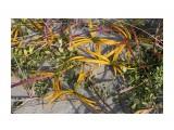 Травочки прибрежные... Фотограф: vikirin  Просмотров: 1264 Комментариев: 0