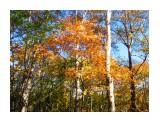 """осень на"""" Санте""""  Просмотров: 1243 Комментариев: 0"""