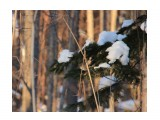 в лесу  Просмотров: 18 Комментариев: