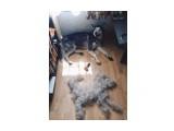 """Название: """"Вычесал своего пса, теперь у меня две собаки :))) """" Фотоальбом: Живности. Пёскины. Категория: Животные  Просмотров: 175 Комментариев: 0"""