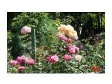 Владивосток. Ботанический сад Фотограф: vikirin  Просмотров: 588 Комментариев: 0