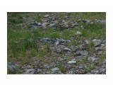 Каменистые поляны.... Фотограф: vikirin  Просмотров: 1727 Комментариев: 0